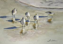 seabird art fine art america sea bird paintings