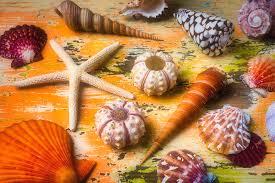 Beautiful Marne Seashell Collection