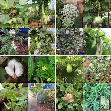 Kitchen Garden In India Urban Leaves India Agro Biodiversity Talk On World Kitchen Garden