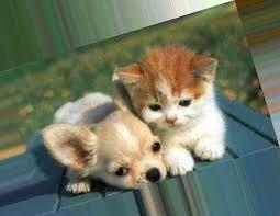 Картинки животные котики и собачки » Прикольные картинки: скачать бесплатно  на рабочий стол