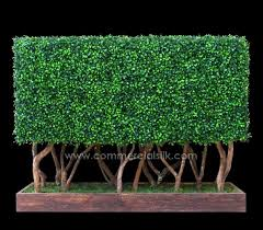 what makes csilk s artificial boxwoods such landscaping marvels