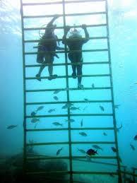 Descend into another world -- Sea Trek underwater walking tours ...