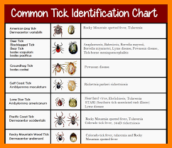 Tick Identification Chart Common Tick Identification Chart Fleaseason Com
