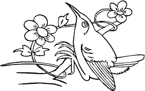 Small Picture Printable Hummingbird Coloring Pages Coloring Coloring Pages