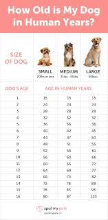 Puppy Teething Age Chart Dog Age Chart See How Old Your Dog Is In Human Years Dog