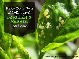 garden pesticides. In The Garden: How To Make Your Own Homemade Organic Insecticides And Pesticides Garden