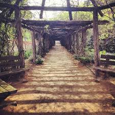 coker arboretum at unc chapel hill tar heel nation  unc chapel hill application essays many guides to writing application essays encourage you to take a risk the writing center university of north carolina