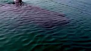 megalodon shark caught on tape up close footage by scared megalodon shark caught on tape up close footage by scared fisherman black demon shark