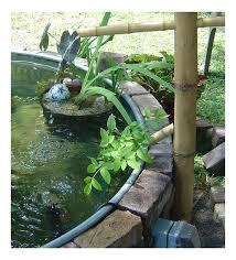 stock tank pond update