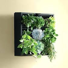 wall planters indoor wall planters indoor m wall hanging ceramic planters for indoor garden in black wall planters