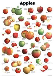 Pear Identification Chart Apples Art Print By Guardian Wallchart Easyart Com World