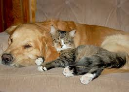 dog and cat sleeping together. Brilliant Sleeping Intended Dog And Cat Sleeping Together