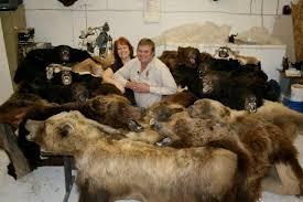 cost to taxidermy a bear rug designs bear skin rug