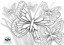 Large Flower Coloring Pages Free Coloring Pictures Of Flowers And
