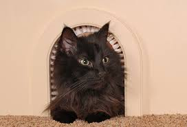 Amazon.com : Cat Door - The Original Cathole Interior Pet Door - The ...