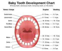 Teething Chart Babies All About Primary Teeth Triangle Pediatric Dentistry