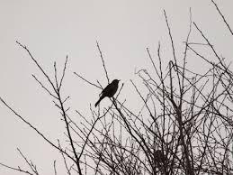 鳥のさえずりに関する写真写真素材なら写真ac無料フリー