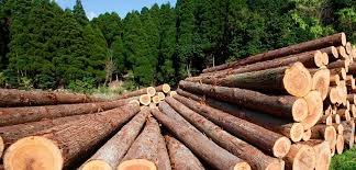 Image result for timber farming