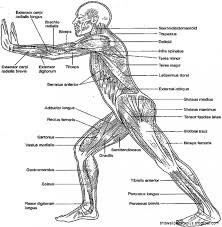 Anatomy Coloring Book Pages