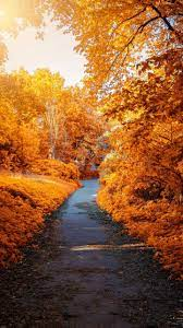 Autumn Android Wallpapers - Wallpaper Cave