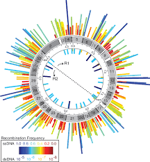 Codon Chart Circle Frequency Map Of Oligo Mediated Tag Taa Codon Replacements