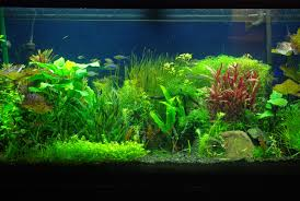fish tank backgrounds - Nengu