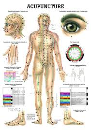 Foot Organ Chart Human Acupuncture Laminated Chart Acupunctura Del Cuerpo In Spanish