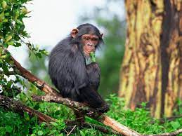 Monkey B Virus: What is it? Symptoms, prevention and all you need to know  about it