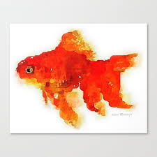 sleeping goldfish watercolor painting canvas print