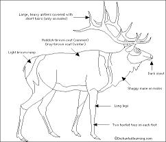 Elk Diagram Elk Antlers Fallow Deer Deer Family