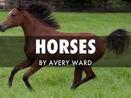Horses by Avery Ward