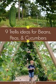 vegetables that climb sprawl trellis