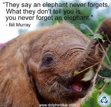 Elephant Quotes Extraordinary 48 Elephant Quotes QuotePrism