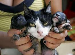 dogs and cats mating together. Fine Cats Neighboru0027s Dog And Her Cat Had A Litter Of Kittens Puppies The  Died Puppies Are Being Genetically Tested To Confirm Or Refute These Throughout Dogs And Cats Mating Together T