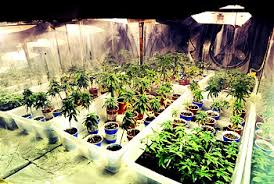 basement grow room design. Suggestions For A Marijuana Grow Room Plan \u0026 Setup Basement Design H