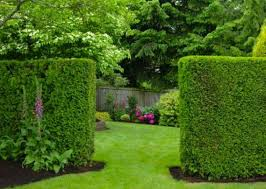 Living Privacy Fence Living Privacy Fence Ideas Home Design Ideas And Pictures