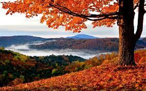 autumn mountains backgrounds. Foliage Mountains Tree Autumn Gold Fog Wallpaper Landscapes Backgrounds A
