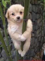 cute baby dog. Unique Cute Cute Dog Throughout Cute Baby Dog A