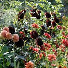 Spring-Planted, <b>Summer</b>-Blooming Bulbs | American Meadows