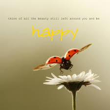 Ladybug Quotes Impressive Ladybug Love Quotes On QuotesTopics