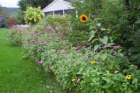 Wildflower Garden Design Inspiration Low Maintenance Landscaping With Wildflowers American Meadows Blog