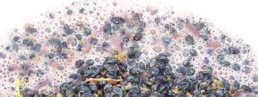 Fermentation in winemaking - Wikipedia