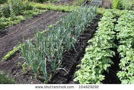 Image result for pictures of gardens flourishing