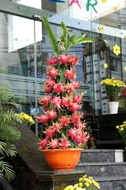 Everything You Need To Know About Dragonfruit  HuffPostHow To Take Care Of Dragon Fruit Tree