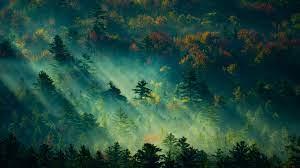 Wallpaper trees, light, green, 4K ...