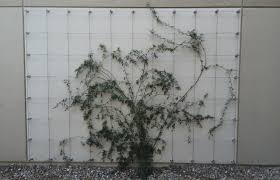 green wall standoff system stainless steel cable trellis kit cable loft tampa florida