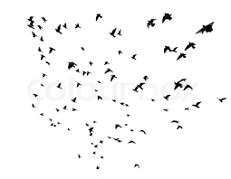 birds flying in the sky silhouette.  Birds Silhouettes Of Pigeons Many Birds Flying In The Sky Motion Blur Isolated  On White  Stock Photo Colourbox In Birds Flying The Sky Silhouette F