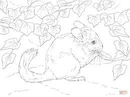 Small Picture Chinchillas coloring pages Free Coloring Pages