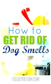 how to get urine smell out of leather couch how to get cat urine smell out