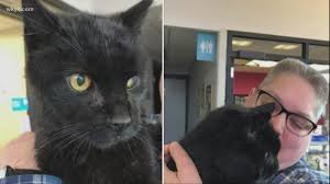celebrity cat missing from gale s garden center found six months later wkyc com